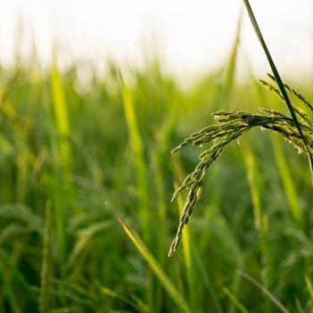 regenerative farming